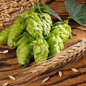 Chiết xuất men bia từ hoa bia